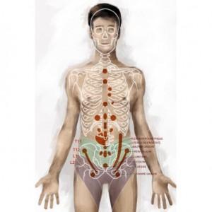 massage-neural-et-douleurs-pelvi-perineales-partie-2